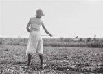 welty chopping cotton