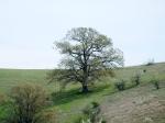 Δέντρο (φωτ. ΗλίαςΚεφάλας)
