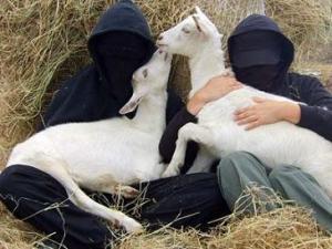 3 - animal liberation front