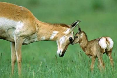 deer_baby